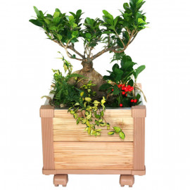[Gallery Deco] Mobile DIY wood potted plants small, two level, indoor garden, made in Korea