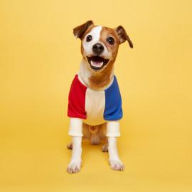 [FLOT] Combi Sweatshirt, Yellow red blue, Dog Clothes _ Dog Shirts, Pet T-Shirts _ Made in KOREA
