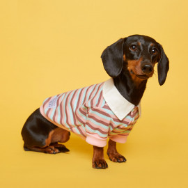 [FLOT] Striped Rugby Shirt, Yellow Pale Pink Sky, Dog Clothes _ Dog Shirts, Pet T-Shirts _ Made in KOREA